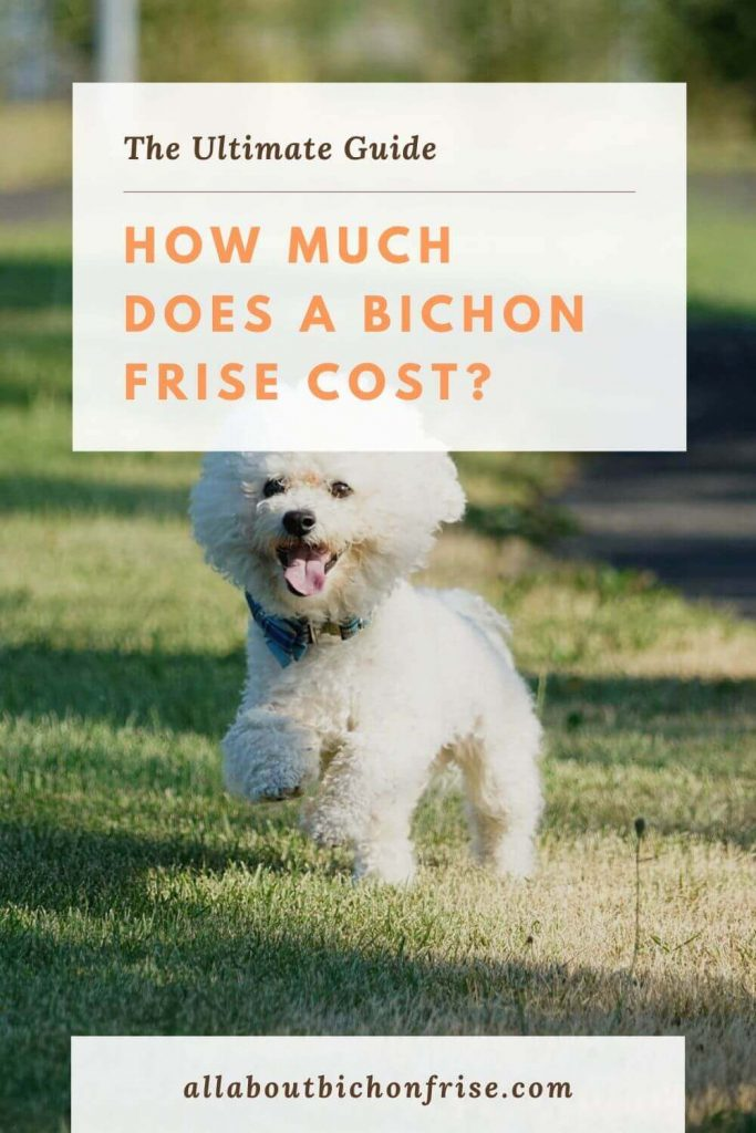 How Much Does A Bichon Frise Cost - pin