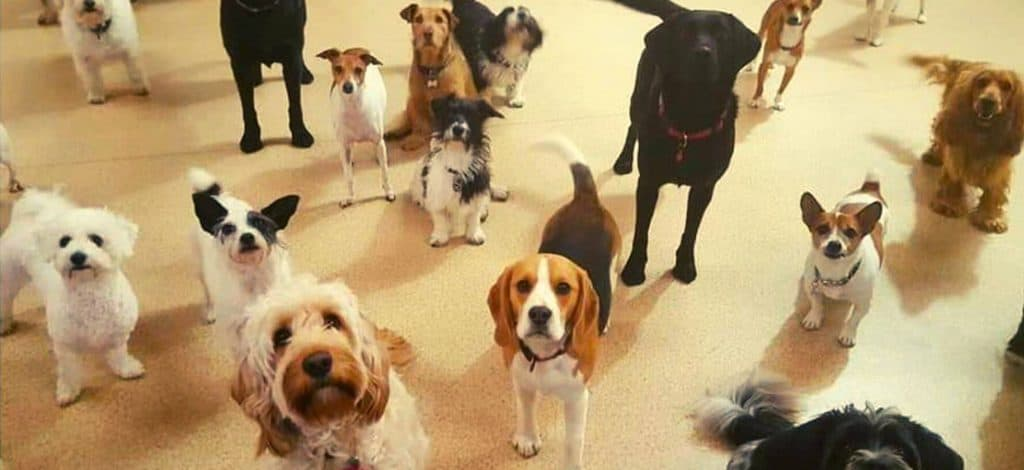 7 Reasons Doggy Day Care Is Beneficial - Cover Image