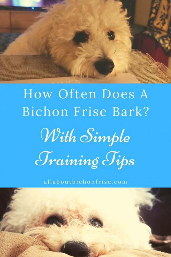 Bichon Frise Bark - Pin