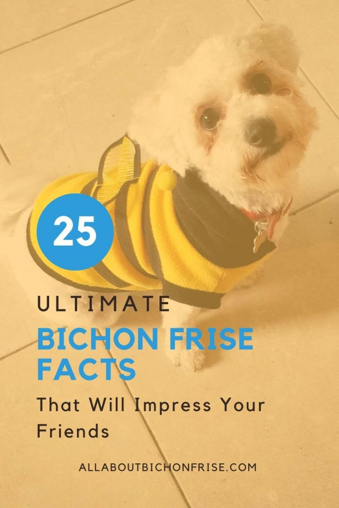 Bichon Frise Facts - Pin