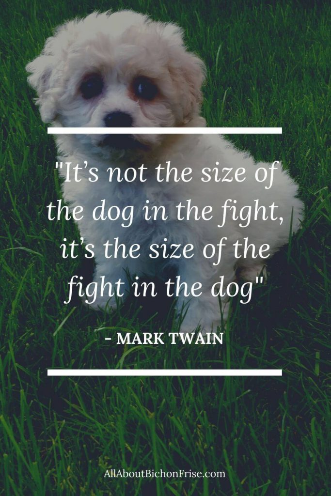 Dog Quotes - It's not the size of the dog in the fight, it's the size of the fight in the dog