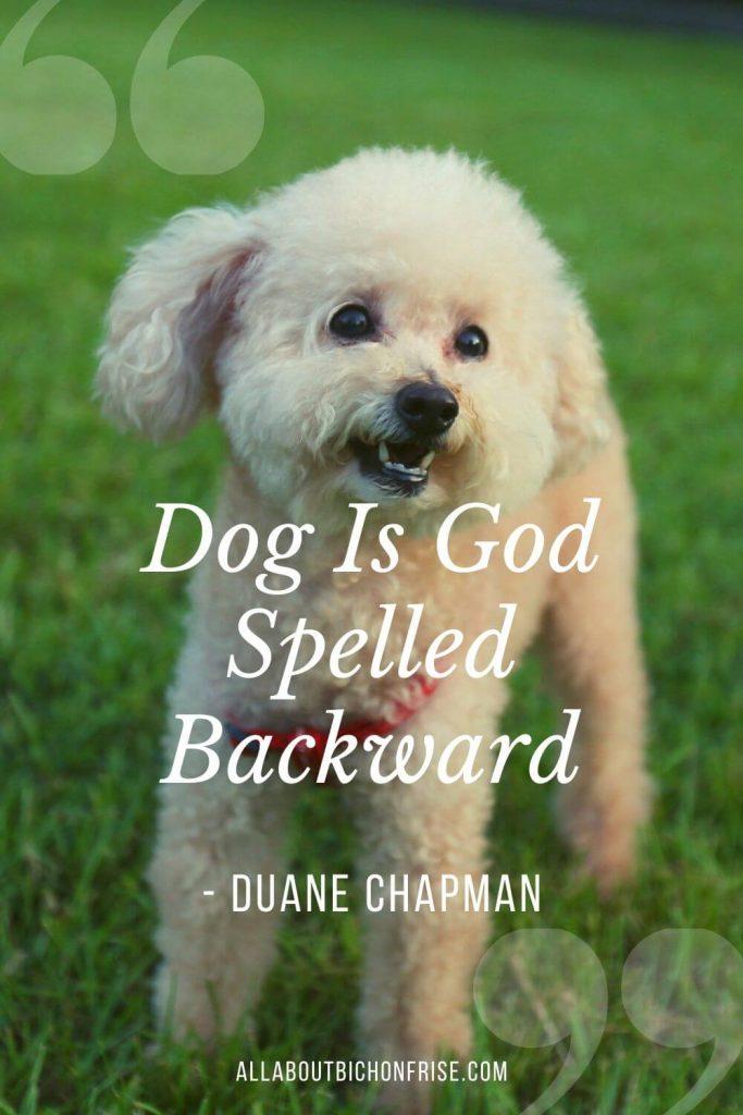Dog Quotes - Dog is God spelled backward