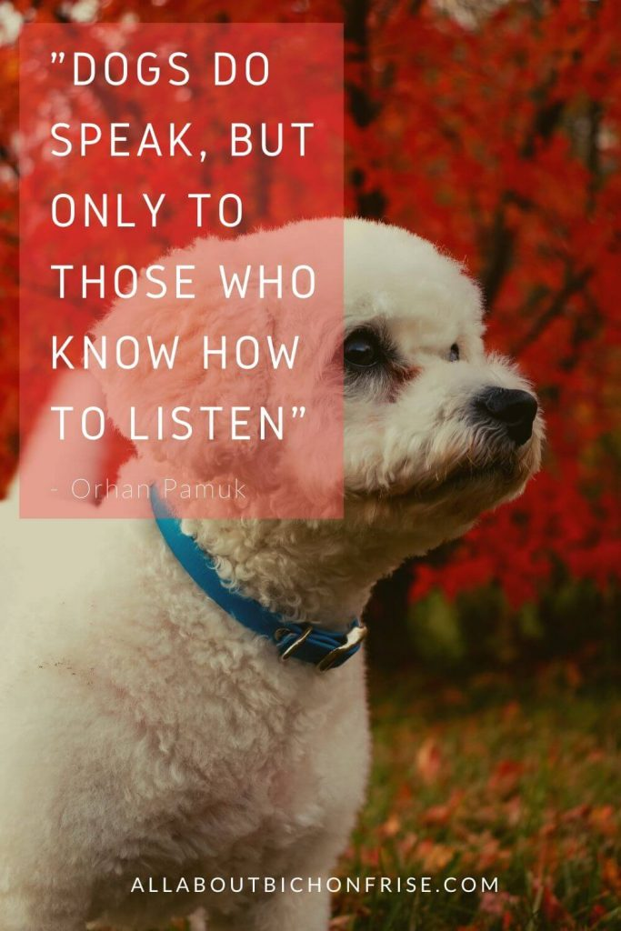 Dog Quotes - Dogs do speak, but only to those who know how to listen