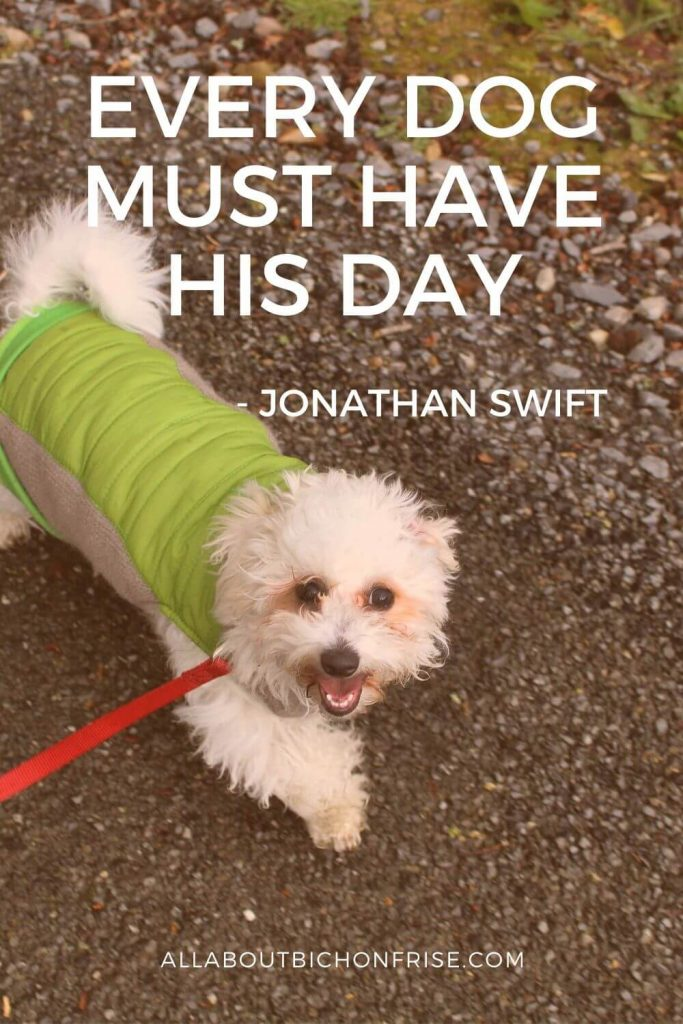 Dog Quotes - Every dog must have his day