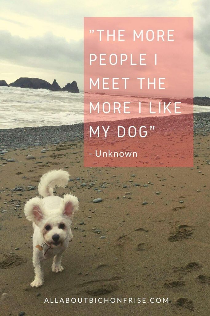 Dog Quotes - The more people I meet the more I like my dog