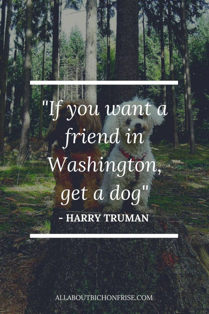 Dog Quotes - If you want a friend in Washington, get a dog