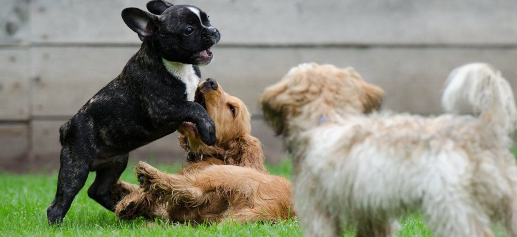 Doggy Day Care - Socializing with other dogs