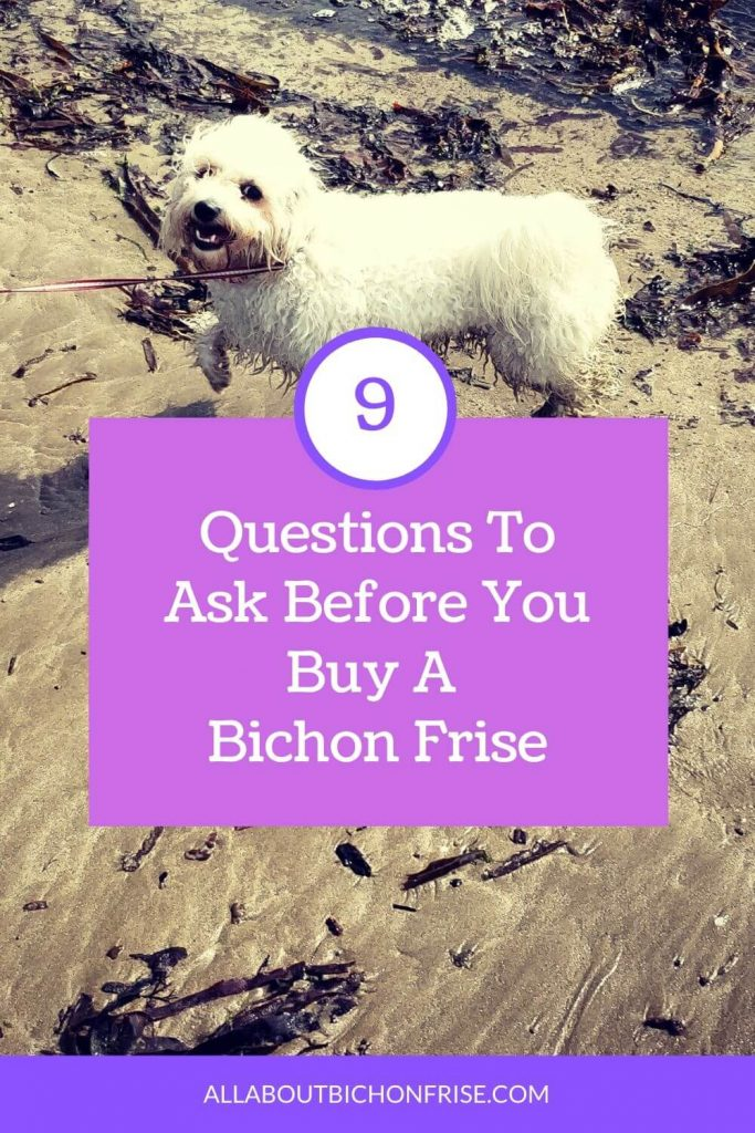 Questions To Ask Before You Buy A Bichon Frise