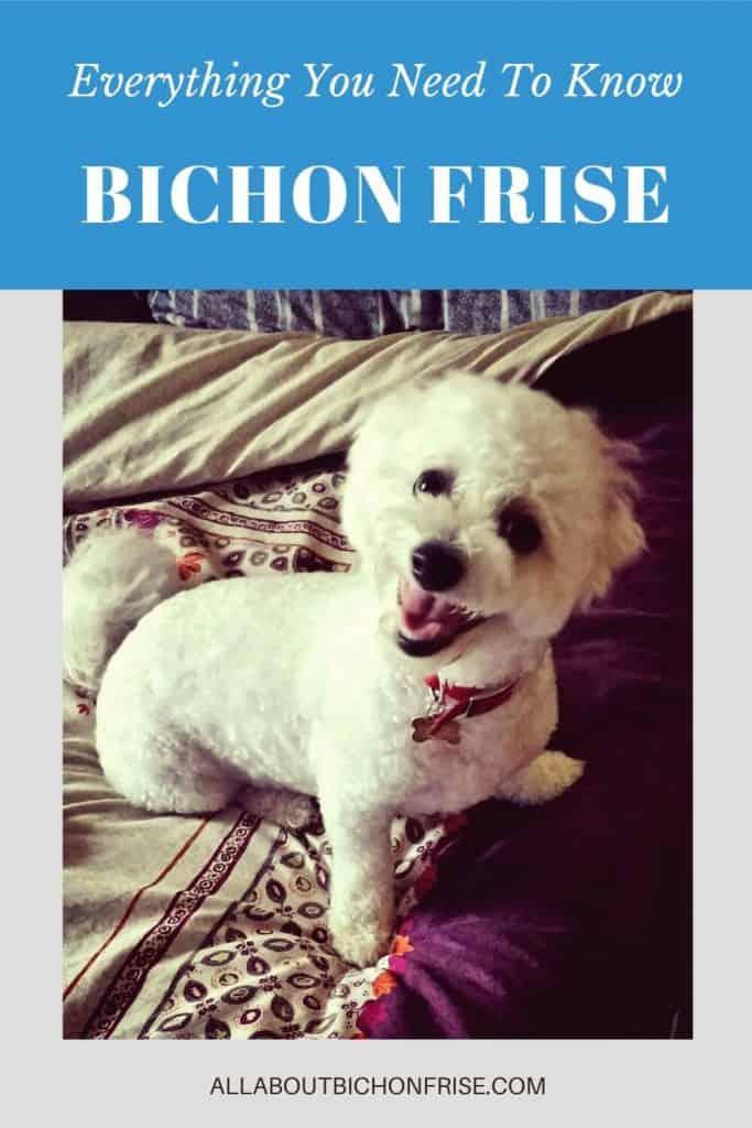Bichon Frise Pin