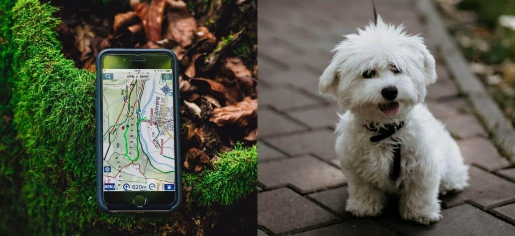Dog GPS Trackers For A Bichon Frise - Cover_Image