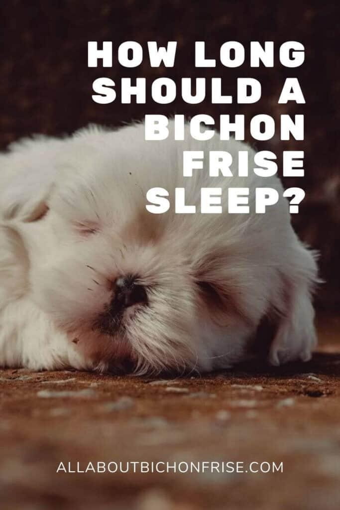 How Long Should A Bichon Frise Sleep? - Pin