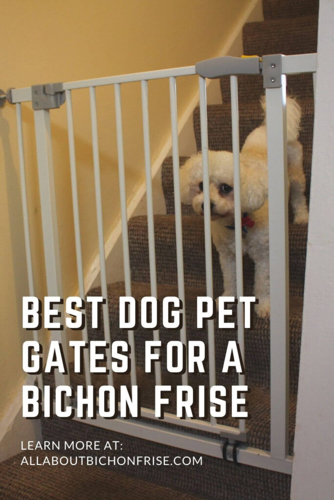 Best Dog Pet Gates For A Bichon Frise - Pin