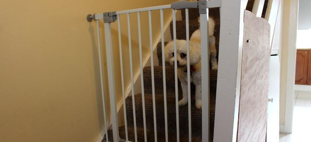 Dog Pet Gates For A Bichon Frise-Cover_Image