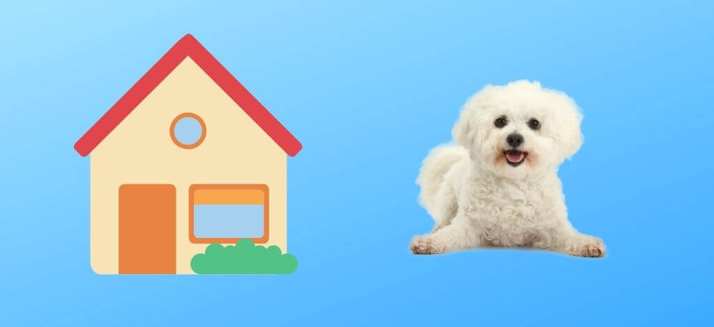 Dog-Houses-For-A-Bichon-Frise-Cover-Image
