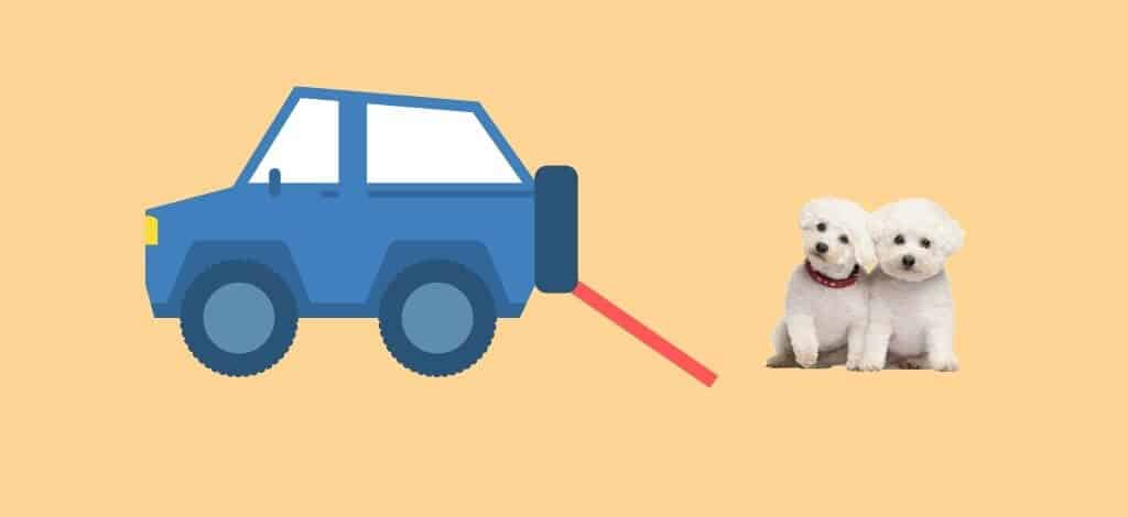 Best Dog Car Ramps For A Bichon Frise - Cover Image