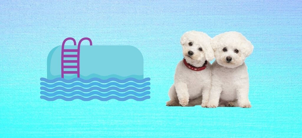 Dog Pools For A Bichon Frise - Cover Image